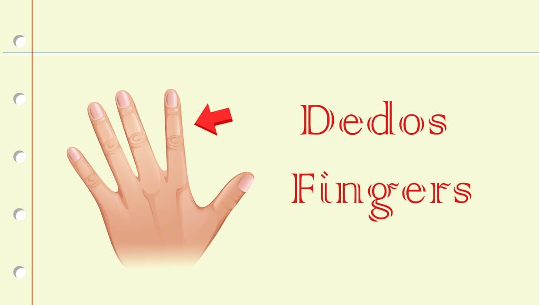 Nome dos dedos em Inglês